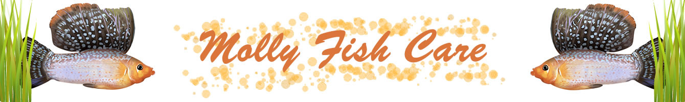 Molly Fish Care